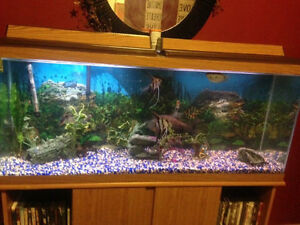 Fish tank 55 gallon