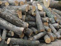 Firewood (Lime, unsplit, green)