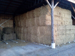 Wheat straw for sale Cambridge Kitchener Area image 3