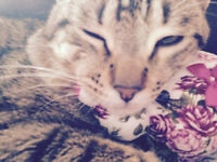 Loving 1 year old male tabby cat needs new home