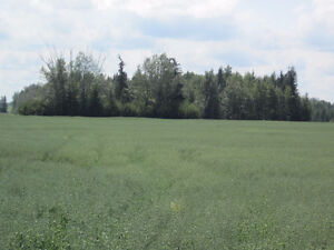 Lush 1/4 Section near Mackay/Chip Lake - Yellowhead County, AB Edmonton Edmonton Area image 4