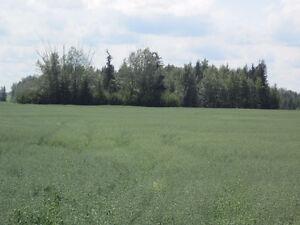 Lush 1/4 Section near Mackay/Chip Lake - Yellowhead County, AB Edmonton Edmonton Area image 4