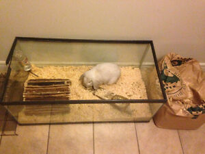 3 YEAR OLD BUNNY LOOKING FOR NEW HOME
