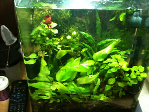 Fluval EBI Nano Shrimp Habitat, 7.9-gallon