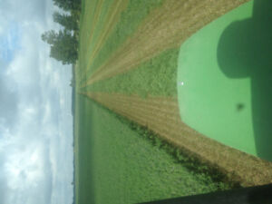 Top quality hay for sale 1st and 2nd cut