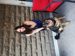 Dog Walking, Drop-Ins and House Sitting Services
