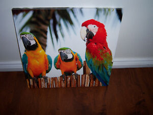 Parrot Birds Wall Art - 20' x 20'