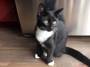 Black and white cat lost
