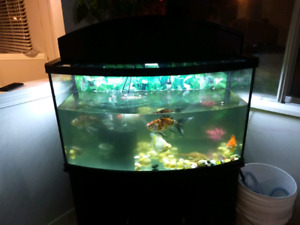 80 gallon fish tank (including all fishes)