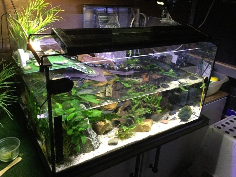 Complete Fish Turtle Tank Aquarium Set Up In Morley West Yorkshire Gumtree
