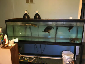 Turtles with 120 gallon tank and accessories
