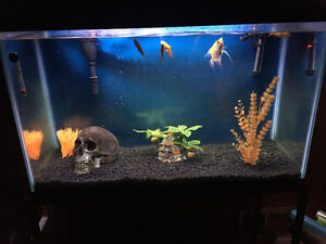 35 gallon fish tank with stand, accessories and even fish