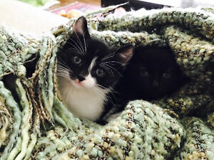 Two Kittens needing a Home