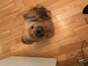 1 year old Pomeranian / Yorkie needs a new home