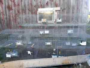 Rabbit wire cages, nestboxes,feeders Kingston Kingston Area image 5