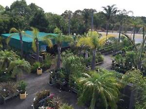 Palms, tropical plants, grass trees and much more! Greenvale Hume Area Preview
