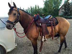 Western Treeless Saddles, Bitless Bridles & more!