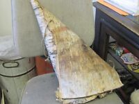 OLD BIRCH BARK MOOSE CALL $10.00 CABIN COTTAGE DECOR !