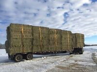 Hay and Pea straw for sale