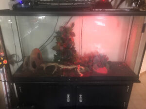 Geckos Albino and Leopard for sale with the whole Set up