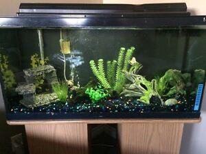 40 gallon aquarium and stand