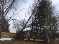 Tree Removal / Windstorm Clean Up (Free Quotes)