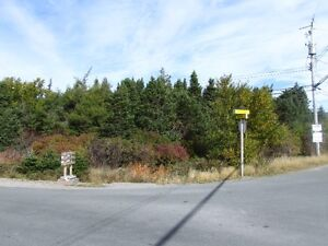 Large private treed lot , Witless Bay 25 mins to city ! St. John's Newfoundland image 2