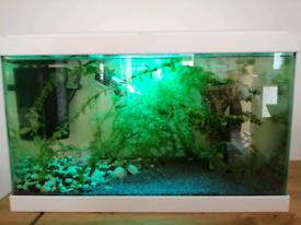 Aquarium 24 Litres. With fish, shrimps and plants.