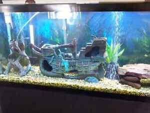 Tropical Fish Tank Cleaning Service London Ontario image 6