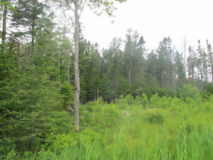 Wooded 2 Acre Lot - Municipal Sewer - No HST Applicable