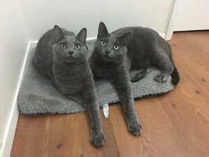 1yr old-2 boys for rehoming.