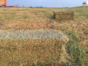 Second cut alfalfa grass mix hay