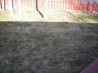 Spring Cean Up and Yard Cleaning