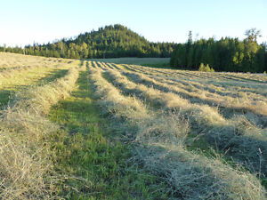 Grass horse hay, $5 to $7 per bale