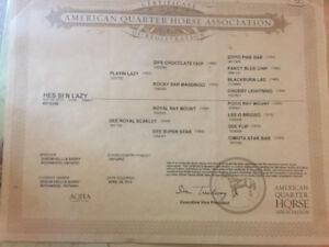 5 year old registered 15.3 QH gelding