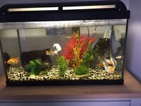 120ltr fish tank and fish for sale