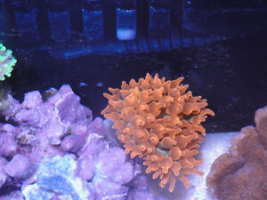 great deal on salt water zoas, coral!
