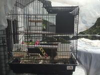 2 budgies with cage, food and accessories ***FOR ONLY $29***