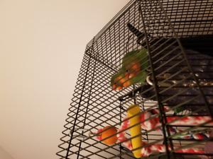 Couple Fisher avec Cage tout équipée