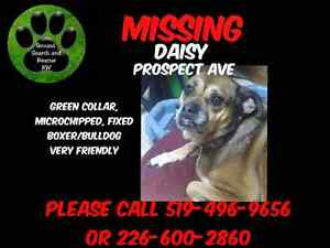 Daisy is missing