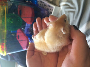 Pet mouse for sale $10. Cage included