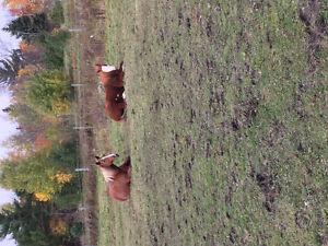 Pensions pour chevaux interieur et exterieur