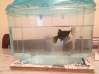 3 fish for sale with tank
