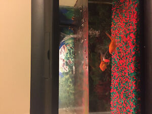 3 Fish with Tank