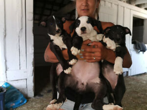Puppies ready to rehome