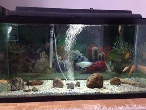 Fish tank 33Gallons with 6 fish in it