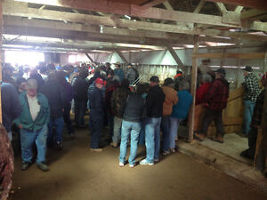 Misc Auction at the Lawrencetown Cattle Sale