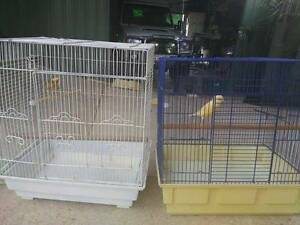 Canaries with or with cage Woombye Maroochydore Area Preview