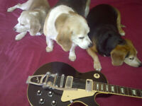 Guitar Technique and Music Theory at Three Beagles Music