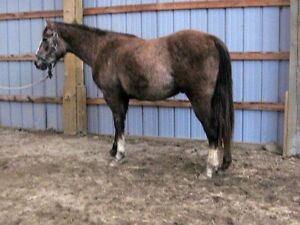 BEAUTIFUL HORSES FOR SALE!